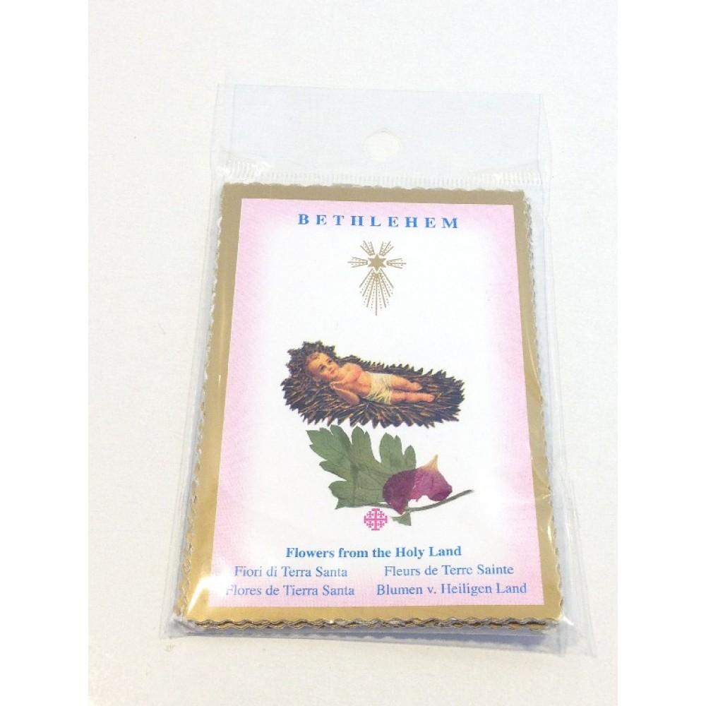 Flower Cards from Bethlehem-Dried Flowers